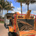Arborcare crew member feeding dead Palm Tree branches to the wood chipper